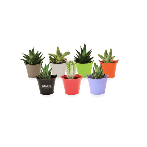 Mini plante dépolluante en pot zinc