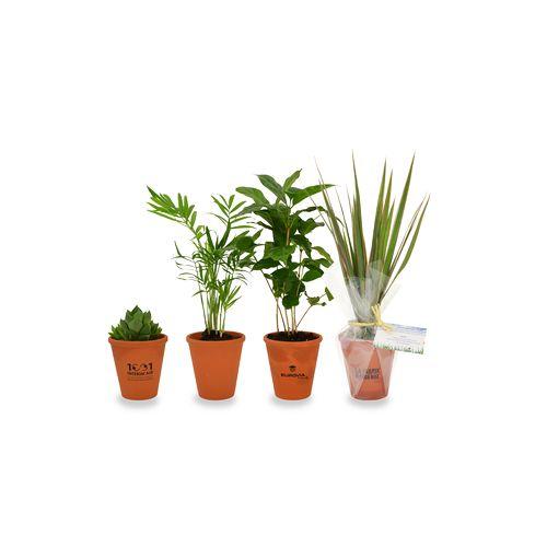 Plante dépolluante en pot terre cuite, Objet personnalisable, comité social économique