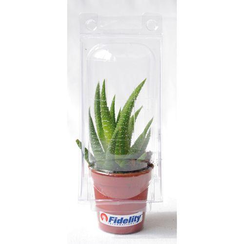 Mini serre 1 pot cactus, Objet personnalisable, comité social économique
