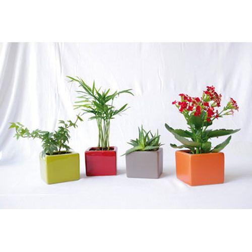 Mini plante en pot céramique, Objet personnalisable, comité social économique