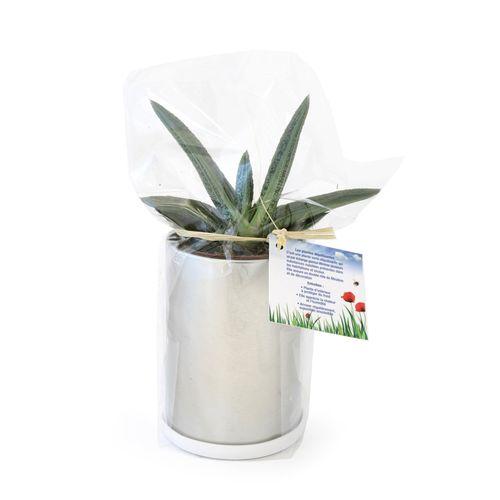 Canette à plante