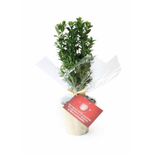 Plante déco en pot Ecolo, Objet personnalisable, comité social économique