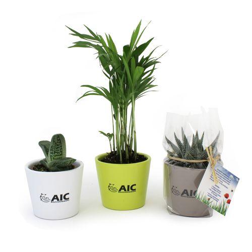 Mini plante dépolluante en pot ceramique