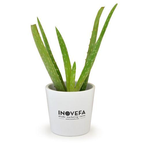 Plant Aloé Vera, Objet personnalisable, comité social économique