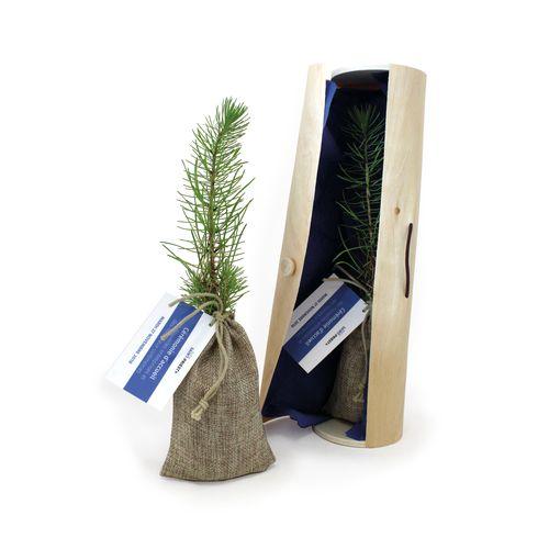 Le plant d'arbre en tube bois - Prestige, Objet personnalisable, comité social économique