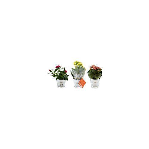 Mini plante en pot zinc