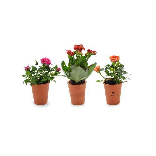 Mini plante fleurie en pot terre cuite