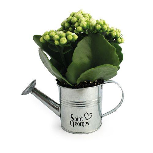 Arrosoir en zinc avec mini plante fleurie, Objet personnalisable, comité social économique
