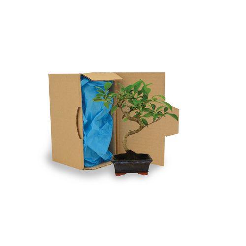 Bonsaï en carton, Objet personnalisable, comité social économique