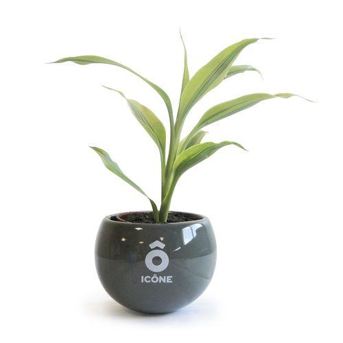 Plante en pot céramique aimanté