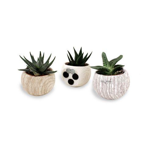 Plante dépolluante en pot magnétique aspect bois, Objet personnalisable, comité social économique