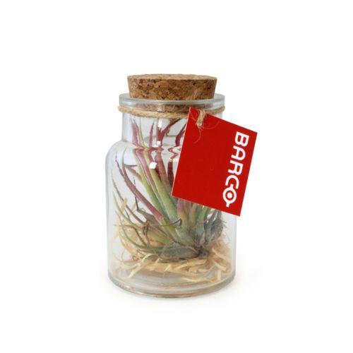 Terrarium Pot tillandsia petit