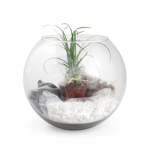 Terrarium Grand modèle, Objet personnalisable, comité social économique