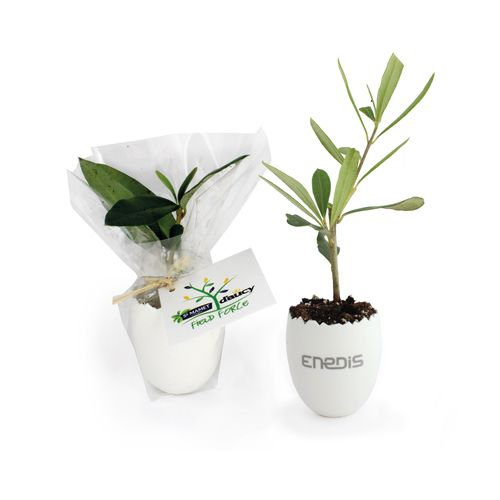 L'oeuf Mini Plant Arbre, Objet personnalisable, comité social économique