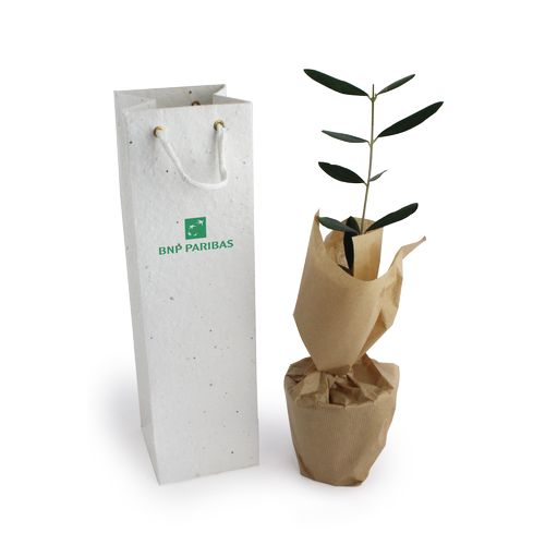 Plant d'arbre en sac kraft Black Collection - Résineux, Objet personnalisable, comité social économique