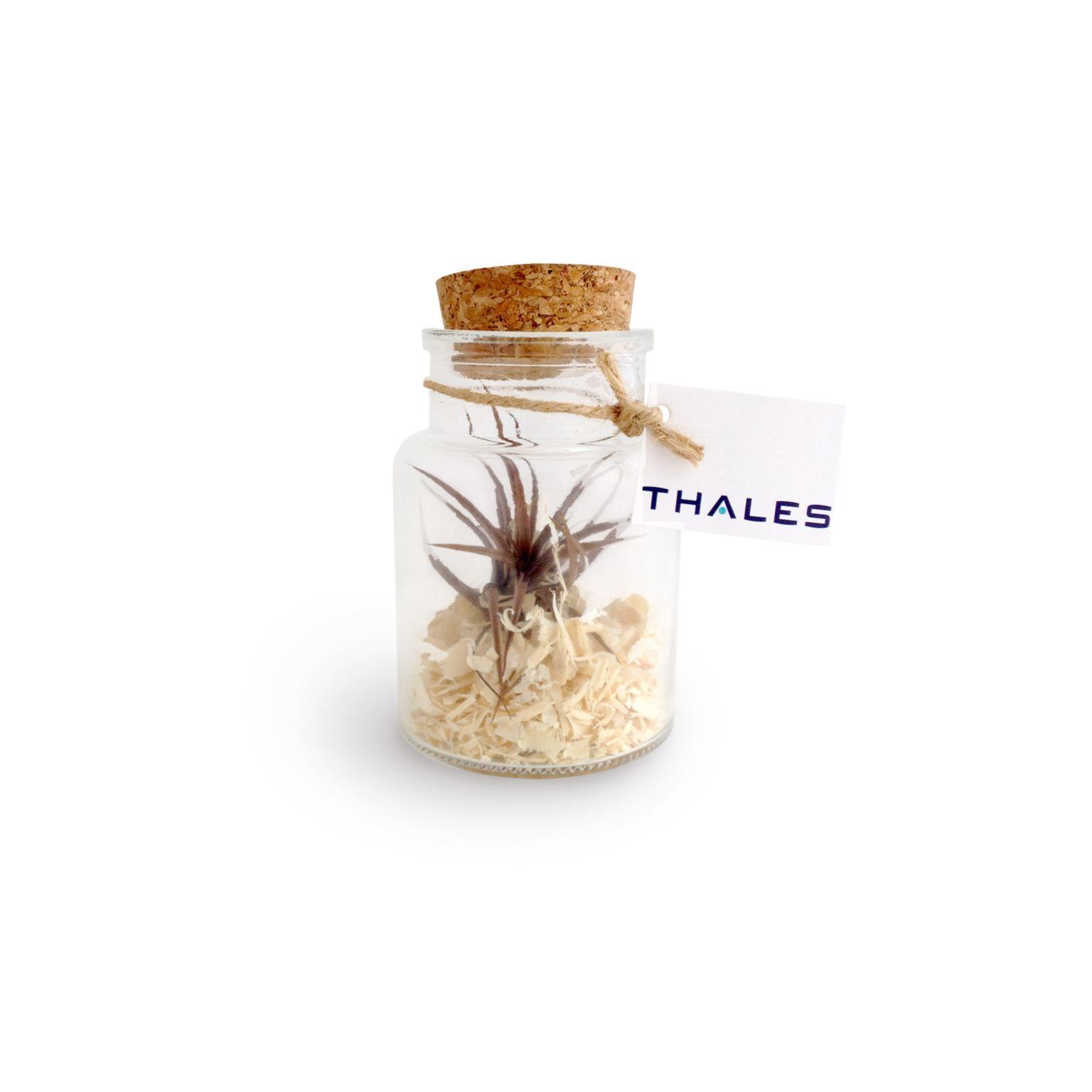 Mini Terrarium Tillandsia en bouteille