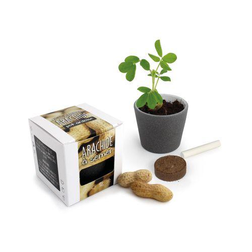 Pot à Graines Cube ARDOISE - Arachide, Objet personnalisable, comité social économique