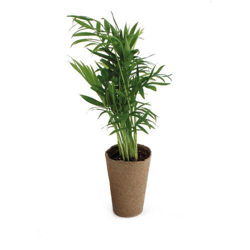 Plante dépolluante 100% écolo, Objet personnalisable, comité social économique