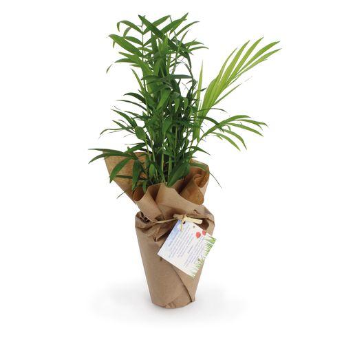 Plante dépolluante 100% écolo - ISOCOM - OBJETS ET TEXTILES PERSONNALISES - NANTES