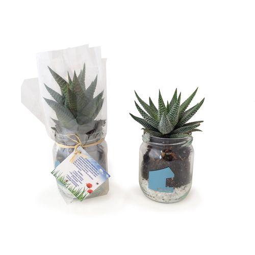 """Les """"Mini Dépolluantes"""" en vase verre"""