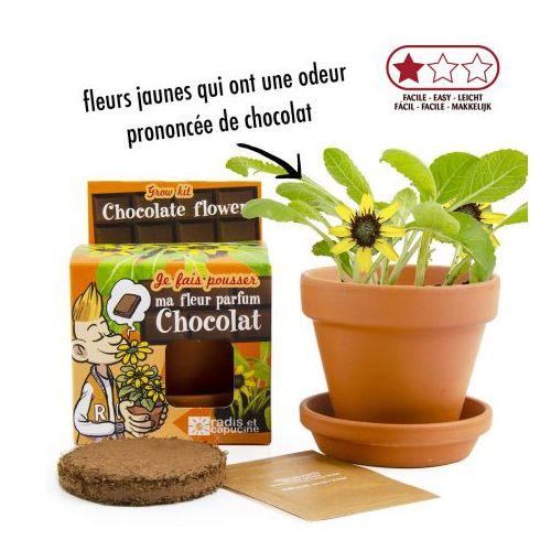 Plante chocolat en pot de culture - pot 8 cm