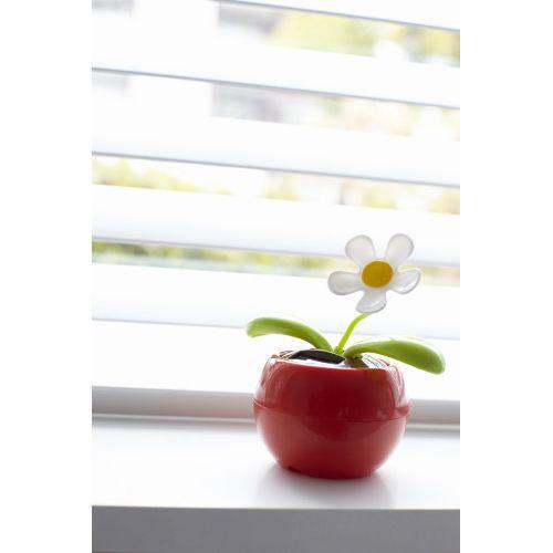 Fleur solaire .
